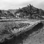 Crop Planting Experiments.